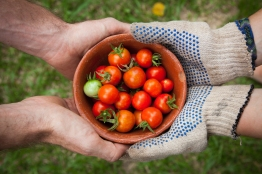 passing a bowl of cherry tomatoes from one pair of hands to another