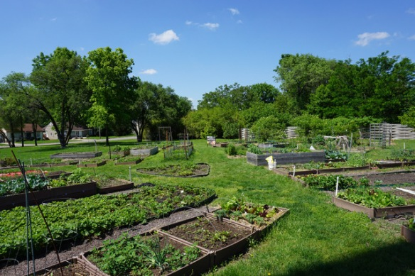 plots at Unite 4 Health garden