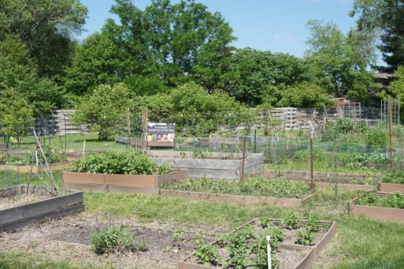 garden plots in spring at Unite 4 Health garden