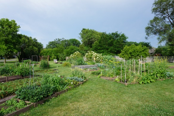 garden plots at Unite 4 Health garden