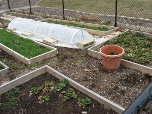 garden beds demonstrating use of row cover with hoops, photo by Mark The Trigeek