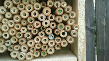 Bamboo tubes filled with cut pieces of leaf.