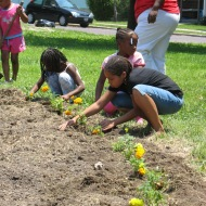 kids plant marigolds at Circus-Lyons garden