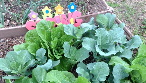 "mixed greens growing in a garden plot with decorative ""spring"" sign"